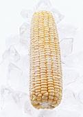 Frozen corn on the cob on ice