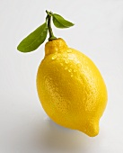A lemon with leaves and drops of water