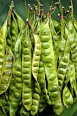 Stink beans (Thailand)