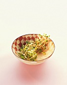 Radish sprouts in a dish