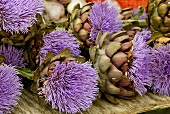 Flowering artichokes