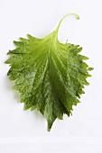 A shiso leaf