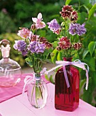 Two posies of aquilegias in glass bottles