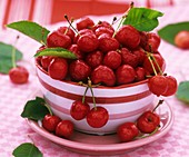 Freshly washed cherries in striped bowl