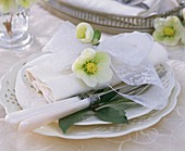 Christmas rose on white napkin on embossed plate