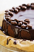 Chocolate cake with mocha beans on cake rack