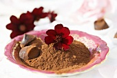 Cocoa powder with chocolate cosmos flowers
