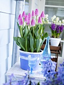 Tulips in flowerpot on a balcony