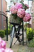 Basket of hydrangeas on a bicycle