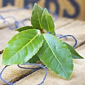 Fresh bay leaves (Laurus nobilis)