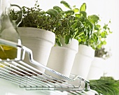 Pots of herbs on a kitchen shelf