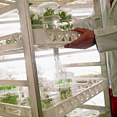 Plants in a plant laboratory