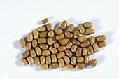 Brown beans (moth beans)