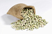 Flageolet beans spilling out of hessian sack