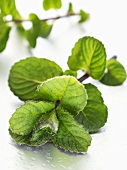 Sprig of fresh mint