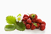 Wild strawberries with flower and leaf