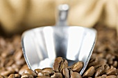 Roasted coffee beans with metal scoop (close-up)
