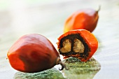 Fruit of the oil palm (Thailand)
