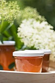 Elderflower and apple jelly in jars on tray