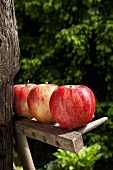 Three red apples on wooden rake in garden
