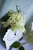 Elderflowers with kitchen scales