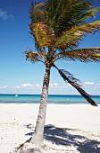 A palm tree by the sea