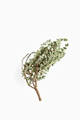 A sprig of thyme