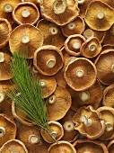 Matsutake mushrooms from above
