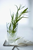 Tarragon in a glass of water