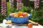 Apricots in enamel pot