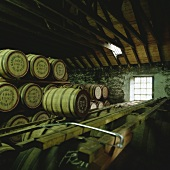 Whisky barrels of Glenmorangie Whisky Distillery, Scotland