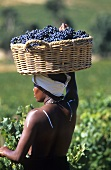 Young S. African woman carrying a basket of grapes