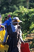 People at work in a vineyard, S. Africa