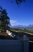 Seidelberg Estate, Paarl, S. Africa