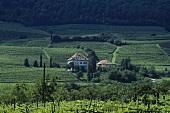 Castel Ringberg, Elena Walch Wine Estate, S. Tyrol, Italy