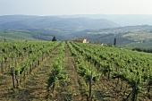 Weingut Al Tondo, Ruffino, Toskana, Italien