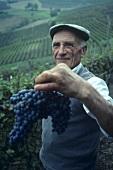 Mann hält Nebbiolo-Trauben, Barolo, Piemonte, Italien