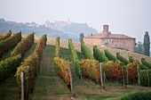 Rows of vines in Barolo wine growing area, Piedmont, Italy