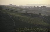 Vineyard near Castiglione Tinella, Asti, Piedmont, Italy