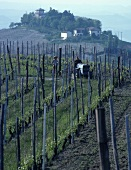 The Barbaresco wine-growing area, Piedmont, Italy