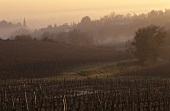 Premières Côtes de Bordeaux, Bordeaux, France