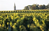 Martillac church tower across vineyard, Graves, Bordeaux