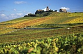 Vineyard of Moulin de Verzenay, Champagne, France