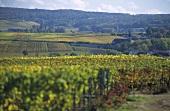 Montagne de Reims, Champagne, France