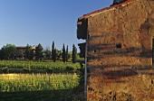 Weinlandschaft Capriva, Gorizia, Friuli, Norditalien