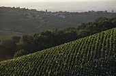 The Chiroubles wine region, Beaujolais, France
