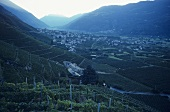 La Gatta Wine Estate, Bianzone, Valtellina, Lombardy, Italy
