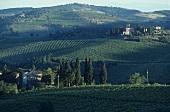 Anbau von Chianti bei Greve, Chianti Classico, Toskana