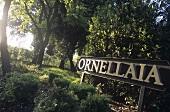 Entrance to Ornellaia Wine Estate, Bolgheri, Tuscany, Italy