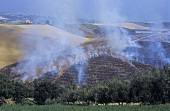 Wheat stubble burning, Colli Senesi, Tuscany, Italy